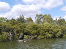 The Australian Paramarra river Royalty Free Stock Photos