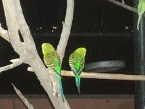 Australian parrot Stock Images