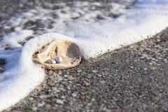 Australian pearls royalty free stock photography
