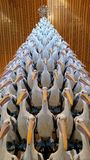 Australian Pelican Christmas Tree Stock Images
