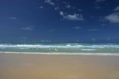 Australian Pelicans (Pelecanus conspicillatus). On the beach (Fraser Island, Australia royalty free stock photos