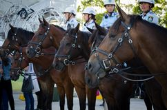 Australian policewomen officers on horses in Royal Easter Show at Sydney Olympic Park. Sydney, Australia. - On April 1, 2013. - Australian policewomen officers royalty free stock images