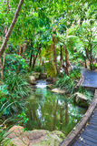 Australian rain forest Stock Images
