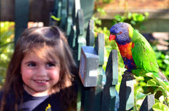 Australian Rainbow Lorikeet. Happy little child (girl aged 4) smiles and looks at Native Australian Rainbow Lorikeet sitting on a wooden fence Stock Images