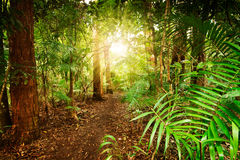 In australian rainforest Stock Photos