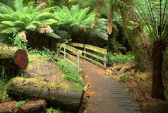 Australian rainforest boardwalk Stock Photo
