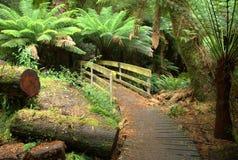 Free Australian Rainforest Boardwalk Stock Photo - 24687160
