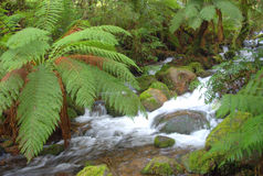 Australian rainforest river Stock Image