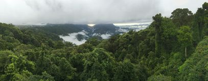 Australian rainforest. Sunrise through the mist over an Australian rainforest Royalty Free Stock Image