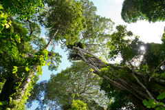 Australian rainforest Stock Photo