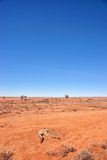 Australian red desert Royalty Free Stock Photos