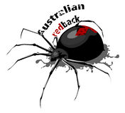 Australian redback spider Stock Photo