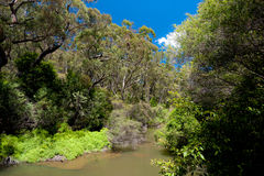 Australian River Landscape Royalty Free Stock Photo