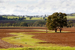Australian Rural Landscape Stock Photos