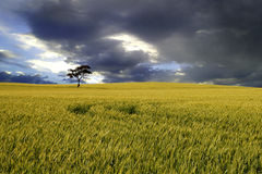 Australian Rural Landscape Royalty Free Stock Photos