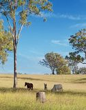 Australian rural landscape view Stock Photo