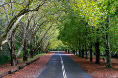 Australian rural road in autumn. Beautiful quite rural street with tall trees on both sides, Mt. Wilson, NSW, Australia Royalty Free Stock Photography