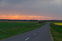Australian rural road near Ballarat at sunset. Clouds glowing pink on the horizon above an Australian rural landscape and road near Ballarat.  Cows graze on a Royalty Free Stock Images