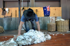 Australian Sheep shearer. QUEENSLAND, AUS - NOV 04 2014:Australian Sheep shearer during work in Queensland, Australia.Australia have mainly Merinos Wool. Each Stock Photography