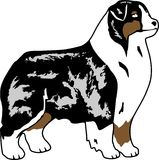 Australian shepherd cartoon. Stock Images
