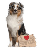 Australian Shepherd dog, 10 months old, sitting Stock Photography