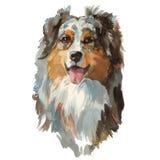 Australian shepherd dog portrait. Australian shepherd - hand painted, isolated on white background watercolor dog portrait royalty free illustration