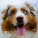 Australian Shepherd face illustration Stock Photography