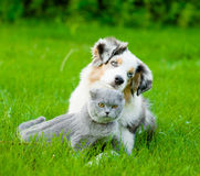 Australian shepherd puppy lying with a cat on the green grass royalty free stock photos