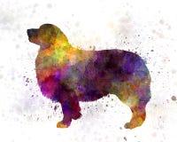 Australian Shepherd 01 in watercolor Stock Photography