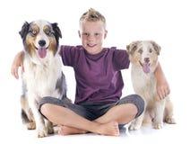 Australian shepherds and boy Royalty Free Stock Images