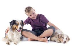 Australian shepherds and boy royalty free stock image