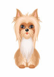 Australian Silky Terrier stock illustration