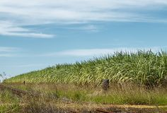 Australian sugar industry sugarcane crop Stock Photo