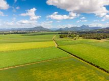 Australian Sugarcane Fields and Landscape. Sugarcane fields near the town of Murwillumbah and Wollumbin National Park Mt Warning in rural New South Wales Stock Photography