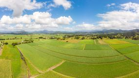 Australian Sugarcane Fields and Landscape. Sugarcane fields near the town of Murwillumbah and Wollumbin National Park Mt Warning in rural New South Wales royalty free stock photo