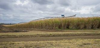 Australian Sugarcane Plantation Stock Photo