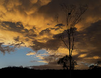 Australian sunset with stormy mammatus clouds. Ominous golden Australian sunset with stormy mammatus clouds and eucalyptus gumtree silhouette royalty free stock image