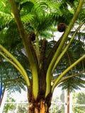 Australian Tree Fern Stock Photos