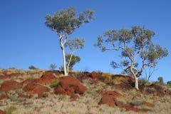 Australian trees. Green trees on a blue sky. Australia Stock Photo