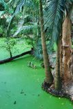 Australian tropical Crocodile swamp Stock Image