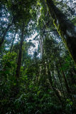 Australian tropical rainforest Stock Photography