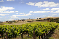 Australian Vineyard Landscape Royalty Free Stock Photos