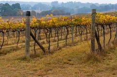 Australian vineyard in winter Royalty Free Stock Image