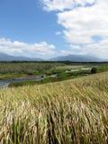 Australian wetland with blue sky Stock Photos