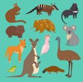 Australian wild vector animals cartoon collection australia popular animals like platypus, koala, kangaroo, ostrich set Stock Photo