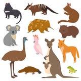 Australian wild vector animals cartoon collection australia popular animals like platypus, koala, kangaroo, ostrich set Royalty Free Stock Images