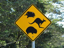Road sign Australian wildlife. Watch out for the unique Australian wildlife: an echidna (spiny anteater), a kangaroo and a wombat - road sign set Royalty Free Stock Photography