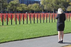 Car crashes rate across South Australia. Australian woman looking at hundreds of roadside markers in Victoria Square to represent all the people who lost their stock image