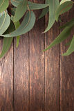 Australian Wood Background Leaves. A wood background with Australian eucalyptus  tree leaves Stock Photography
