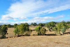 Australiano Outback Fotografie Stock Libere da Diritti